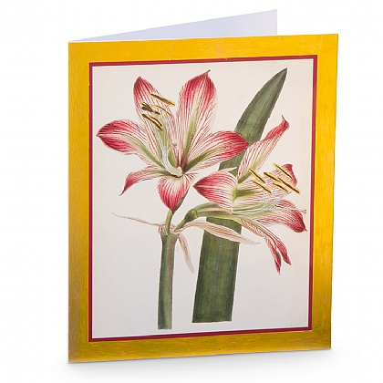 Cartes amaryllis finition luxe